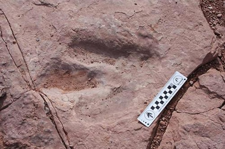 Image: The dinosaur track that was stolen