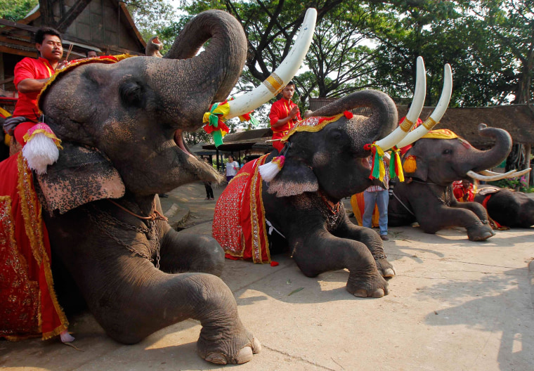 Mahouts pray while sitting on top of elephants during Thailand's National Elephant Day in the ancient Thai capital Ayutthaya on March 13, 2014. Thais honored the elephant on Thursday with special fruit and Buddhist ceremonies across the country to pay homage to their national animal.