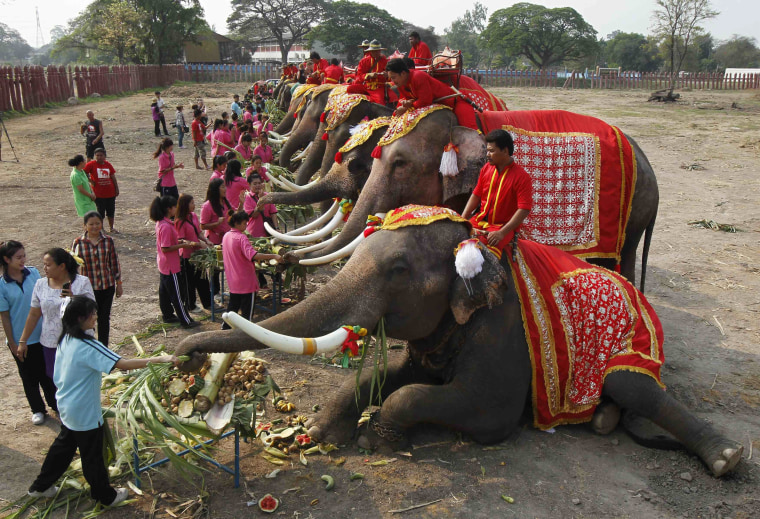 Image: Elephants enjoy a buffet'of fruit and vegetables during Thailand's National Elephant Day in the ancient Thai capital Ayutthaya