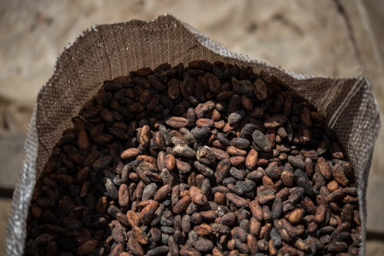Image: Dried cacao beans