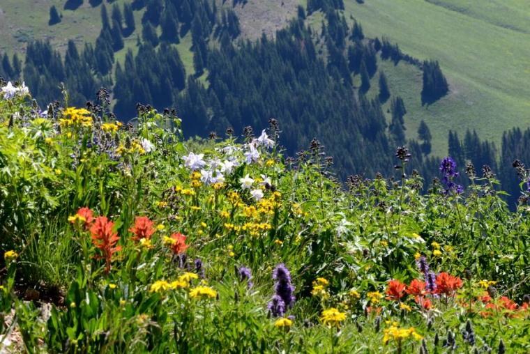Image: Rocky Mountain wildflowers