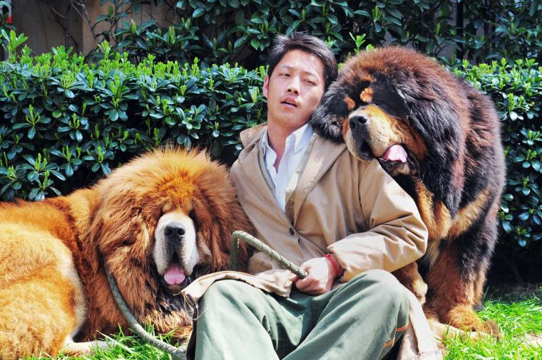 Image: TOPSHOTS-CHINA-DOG-OFFBEAT