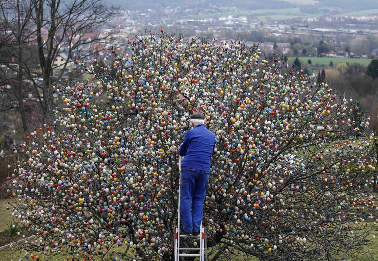 Image: German pensioner Kraft decorates an apple tree with Easter eggs in the garden of his summerhouse in the eastern German town of Saalfeld