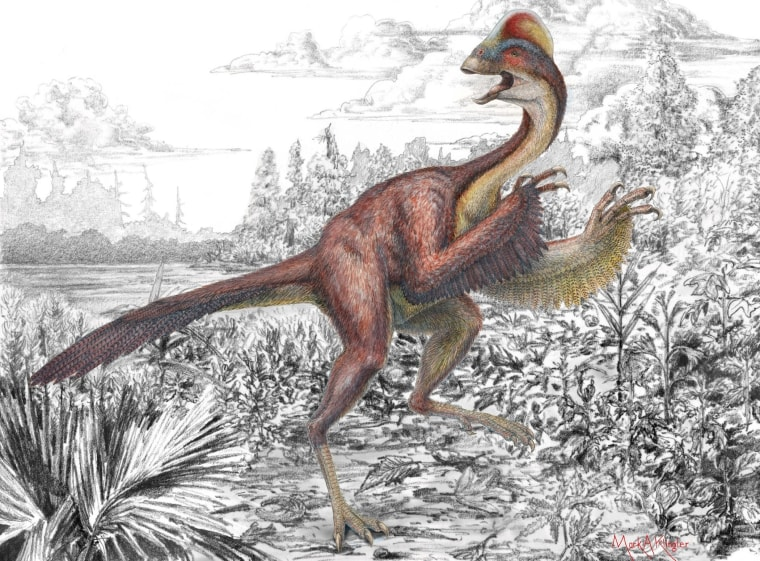 """Anzu wyliei, a birdlike dinosaur nicknamed the """"chicken from hell"""" that roamed the Dakotas 66 million years ago, appears in its natural environment in this artist's depiction."""