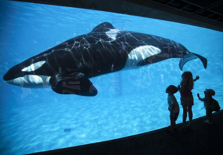 Image: Young children get a close-up view of an Orca killer whale during a visit to the animal theme park SeaWorld in San Diego, California