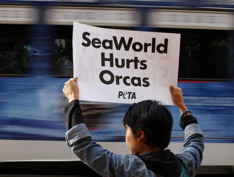 Image: A protester for PETA holds up a sign as a street car passes, during a rally protesting against the city council's plan to honor SeaWorld San Diego for it's 50th anniversary, outside city hall in San Diego