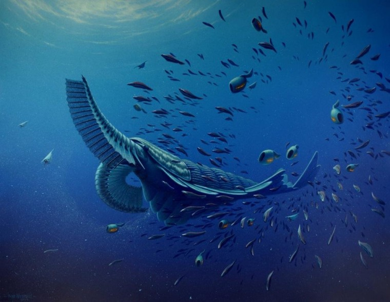 Artists' reconstruction of Tamisiocaris borealis, unearthed in the Sirius Passet formation in northern Greenland.