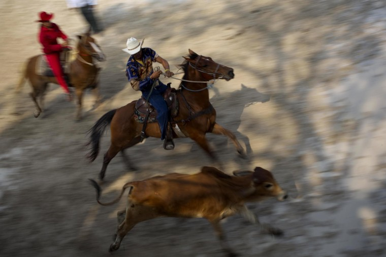 Image: Cuban cowboys compete in a steer wrestling event at the 17th annual Boyeros Cattlemen's International Fair rodeo in Havana