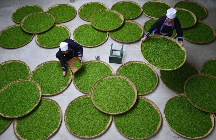 Image: Ethnic Dong women work at a tea leaf processing factory in Liping county