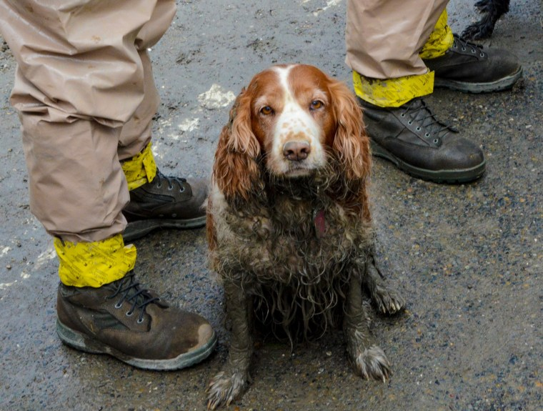 Image: A search dog waits by the feet of Washington National Guardsmen to be washed after working the debris field created by the Oso mudslide