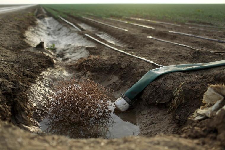 Image: A tumbleweed is seen at an irrigation channel on a farm near Cantua Creek, California