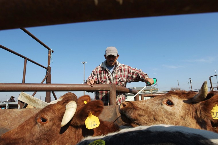 Image: A cowboy moves cattle at Visalia Livestock Market where they are being auctioned off at four- to five-times the usual rate