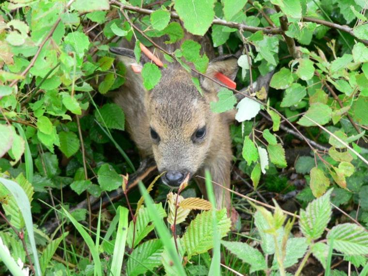 Image: Baby deer