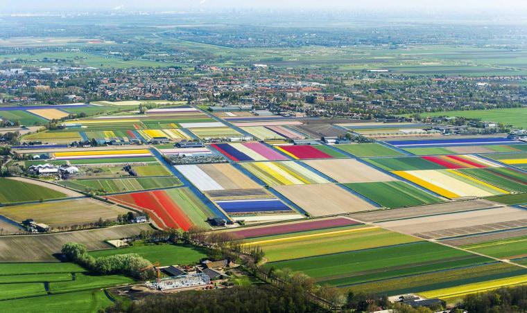 Image: Tulip fields