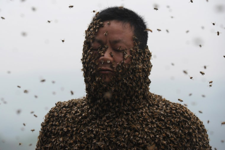 She Ping is covered with a swarm of bees on a small hill in Chongqing, southwest China, on April 9, 2014.