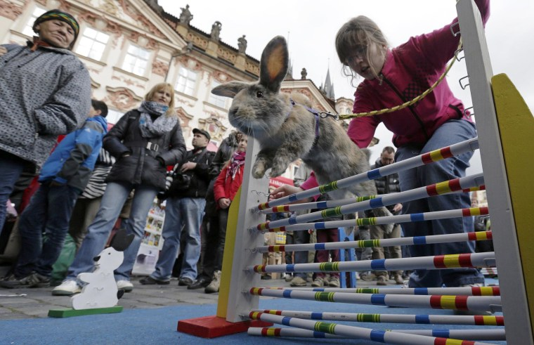 Image: People look at a rabbit jumping over an obstacle at the traditional Easter market at the Old Town Square in Prague