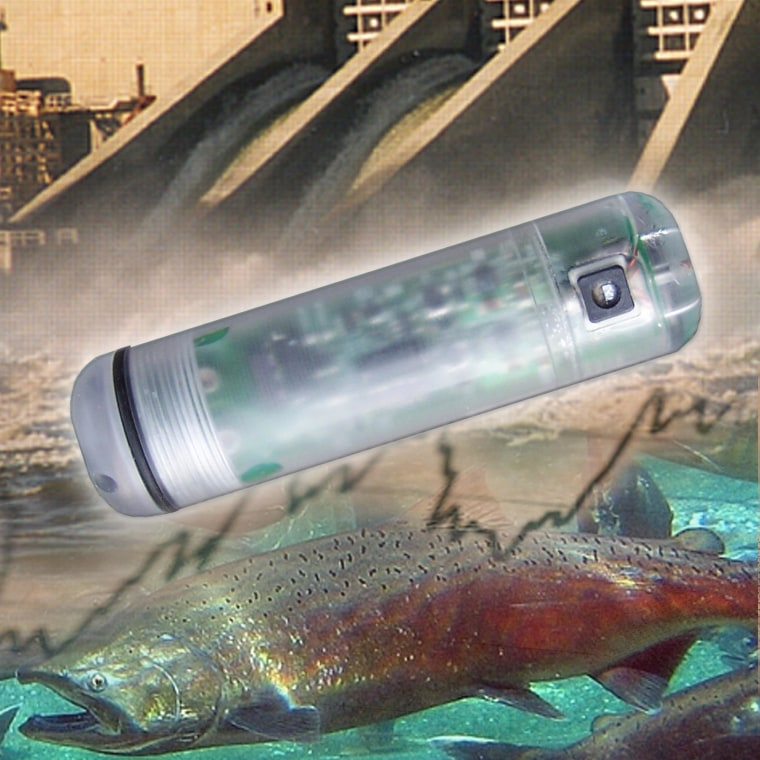 A sensor fish is sent through turbines to measure the pressure conditions inside.