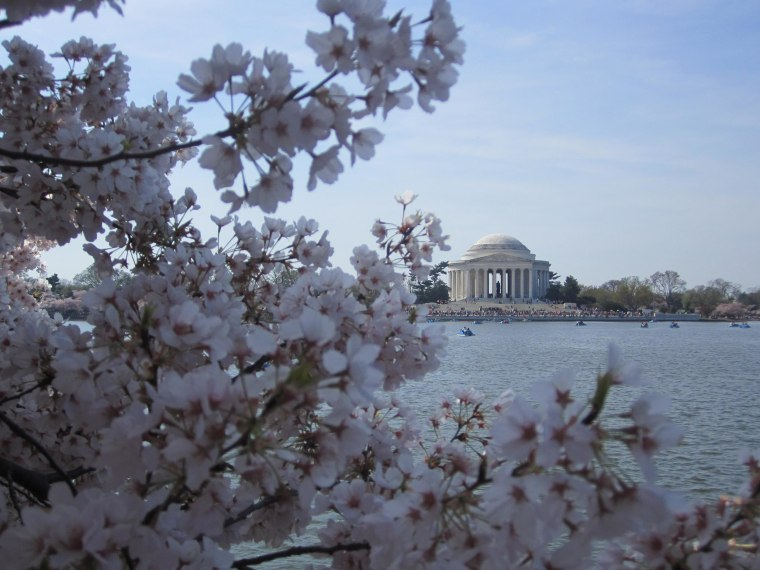 Each year, the Cherry Blossom Festival marks the unofficial arrival of spring in our nation's capital. It also commemorates the 1912 gift of 3,000 cherry trees from Mayor Yukio Ozaki of Tokyo to the city of Washington, D.C.