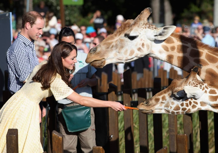 Image: Prince William and Catherine, Duchess of Cambridge, feed giraffes at Sydney's Taronga Zoo