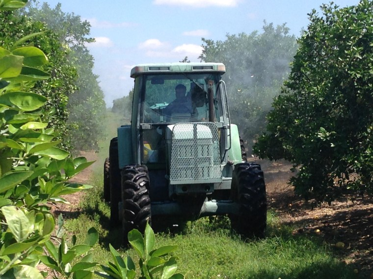 Citrus growers aggressively fight citrus greening by spraying fungicide in Fort Pierce, Fla.