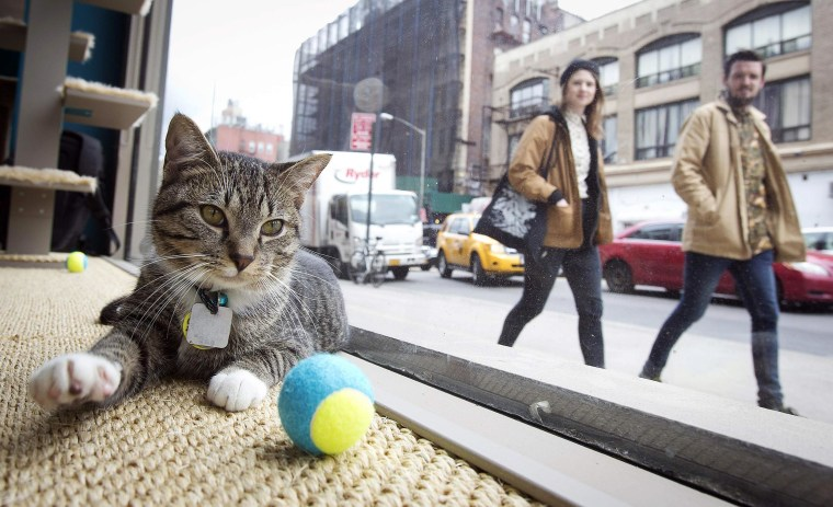 A cat sits at the window of the cat cafe in New York on April 23.