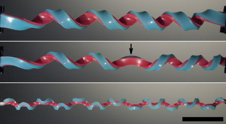 Image: Helix and hemihelices