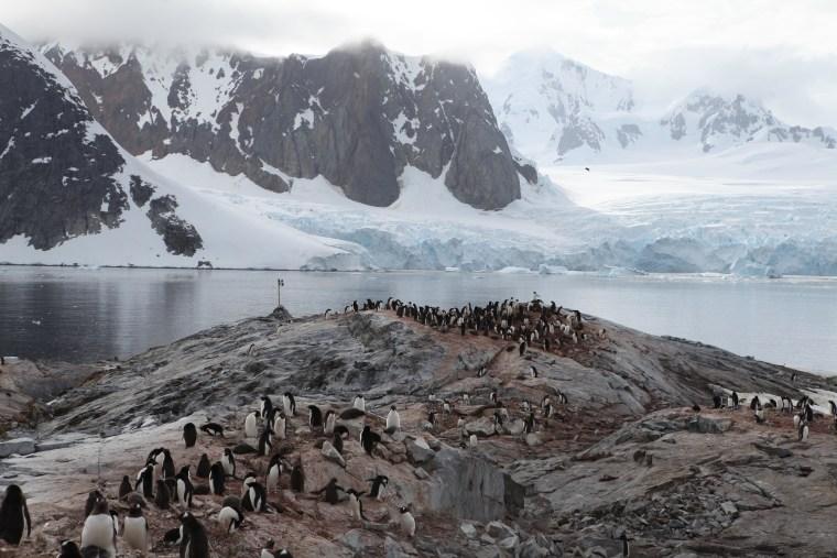 Penguins Antactica