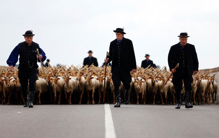Image: Traditional Hungarian shepherds walk in front of their Racka sheep during celebrations of the start of the new grazing season in the Great Hungarian Plain in Hortobagy