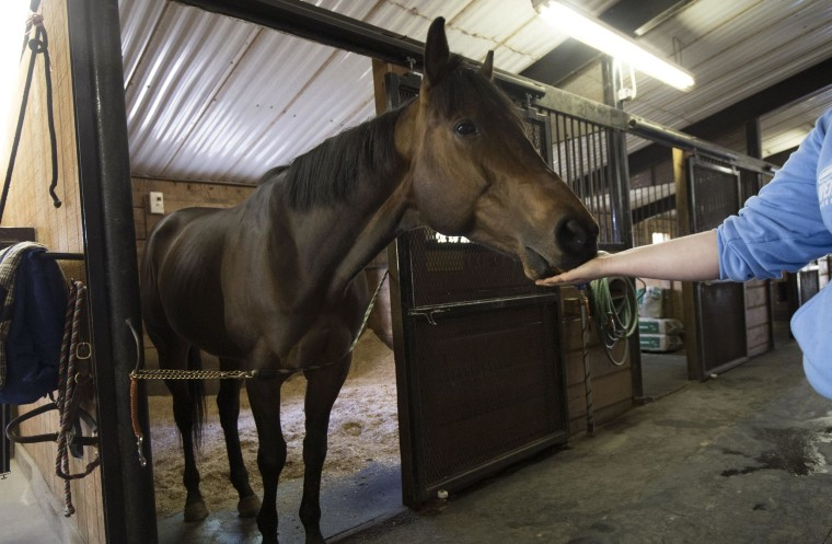 Image: Valediction, a thoroughbred racehorse, retired in Loudoun County, Va.