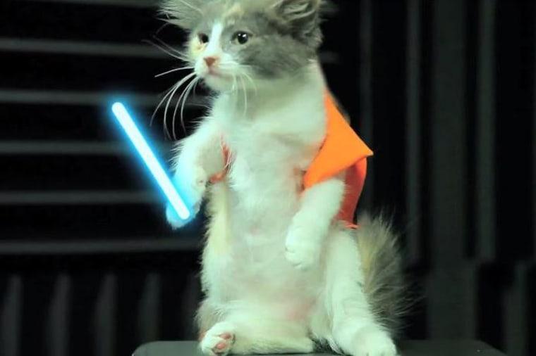 Jedi cat
