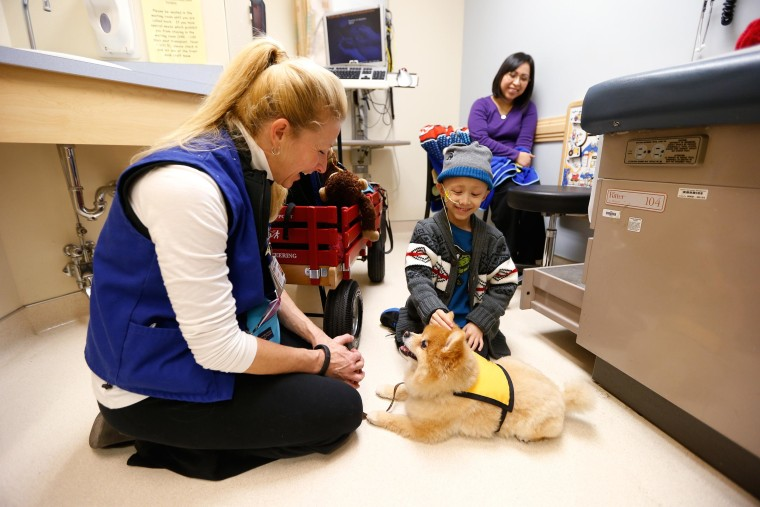 Patient Bobby Harris plays with Swoosh, a miniature Pomeranian, that visits Children's Hospital with its owner and volunteer Michelle Thompson.