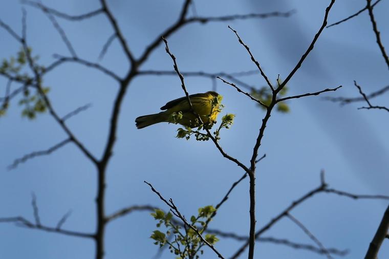 Image: Bird Watching Groups Head To NYC Parks As Seasonal Migration Patterns Pass Thru Area