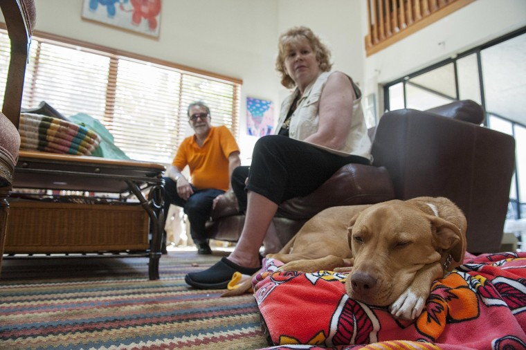 "Image: A 3-year-old mixed breed named ""Zoe"" relaxes."