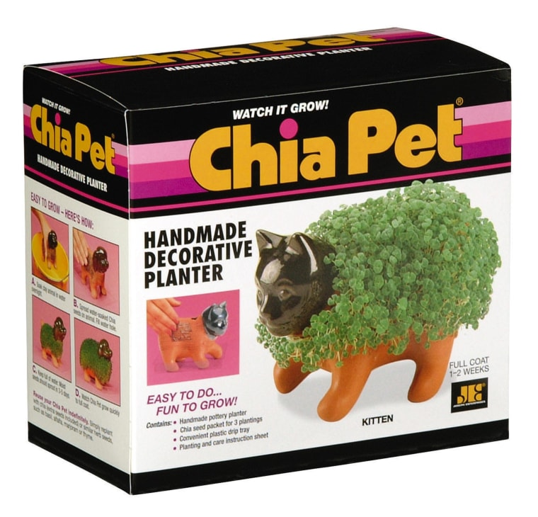 KITTEN CHIA PET