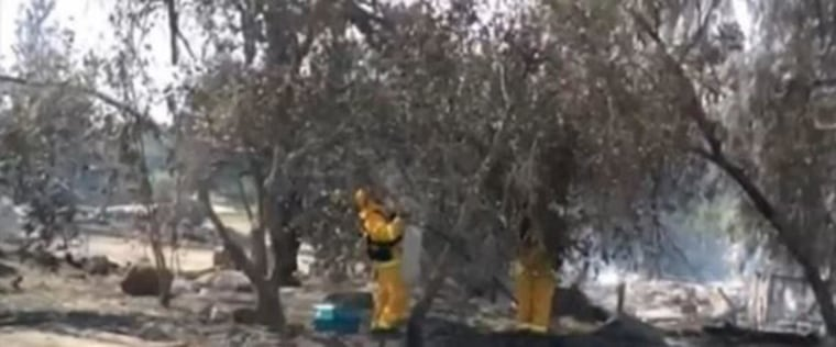 San Marcos firefighters work to remove a cat from a tree