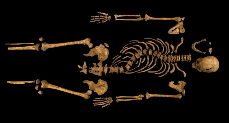 The complete skeleton of King Richard III showing the curve of his spine.