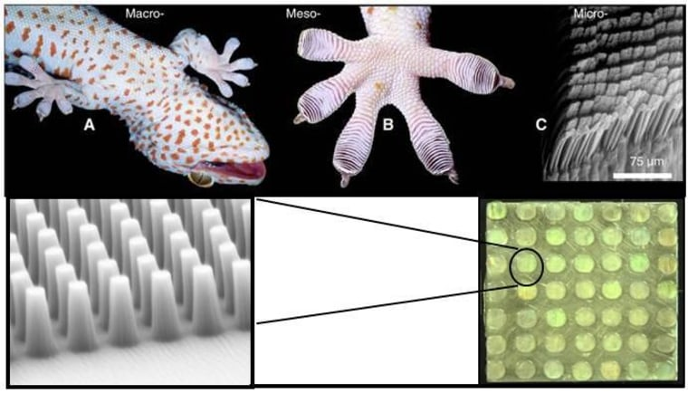 DARPA illustration showing the structure of gecko feet (above) and the Z-Man material imitating it (below).