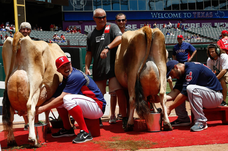 Image: Texas Rangers' Robbie Ross, left, and Cleveland Indians' George Kottaras, right, compete in a cow-milking contest