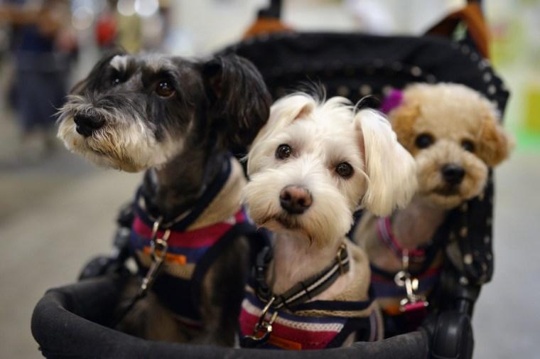 Image: Interpets international pet fair
