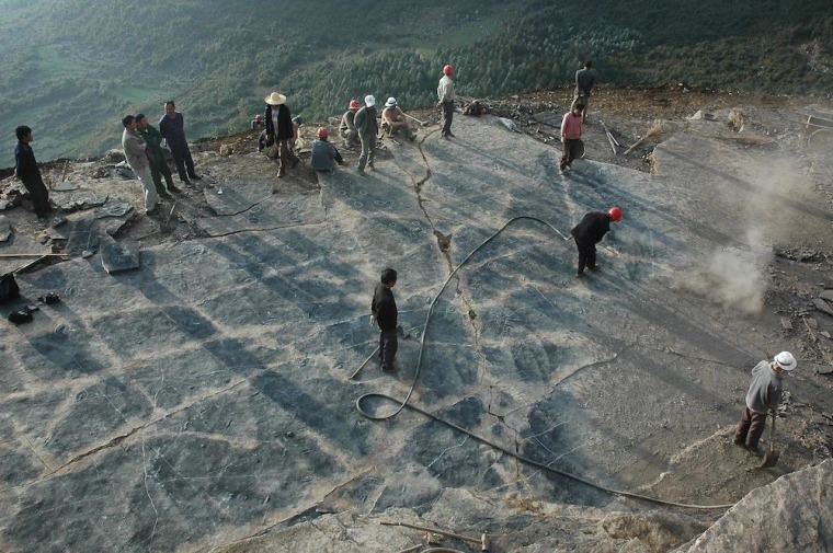 Here, students and farmers help excavate the track marks made by nothosaurs 245 million years ago.