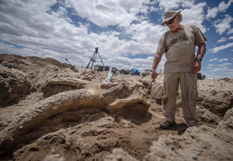 Image: Paleontologist Gary Morgan stands over a the fossil of a stegomastodon skull
