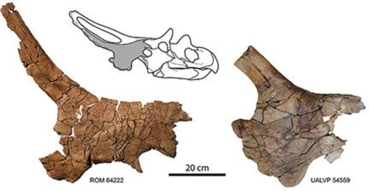 Image: Skull fragments