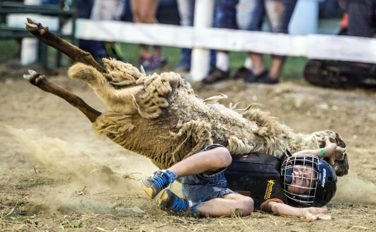 Kayden Dunaway, 6, falls off a sheep during the Mutton Bustin' competition at the Garrard County Fair near Lancaster, Ky. on June 26.