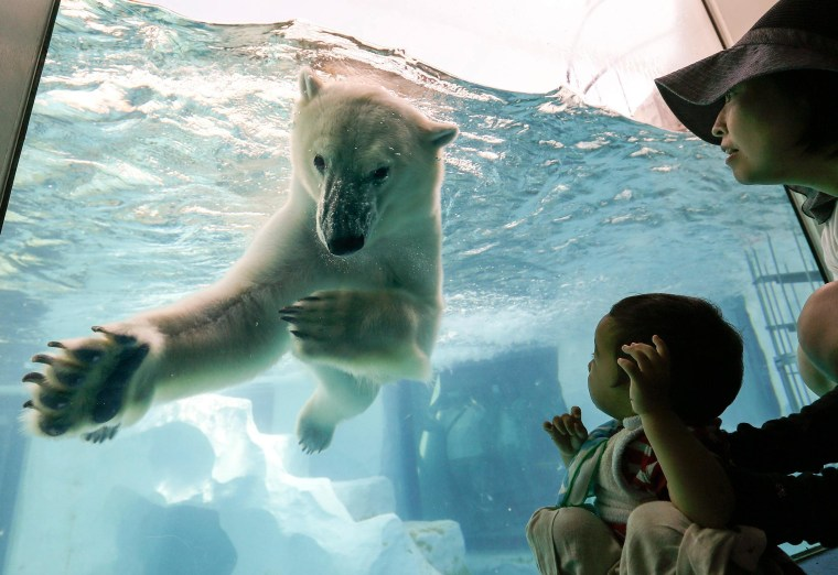 Image: A little boy, right,  looks at a polar bear as it swims in its enclosure's pool at Ueno Zoo in Tokyo, Japan