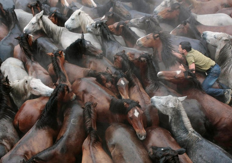 """Image: A reveller tries to hold on to a wild horse during the \""""Rapa Das Bestas\"""" traditional event in the Spanish northwestern village of Sabucedo"""