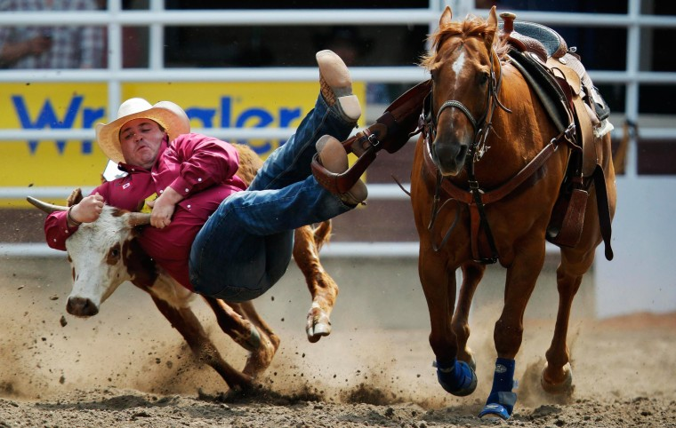 Image: Milan jumps off his horse to wrestle a steer in a steer wrestling event during day 1 of the rodeo at the 102nd Calgary Stampede in Calgary