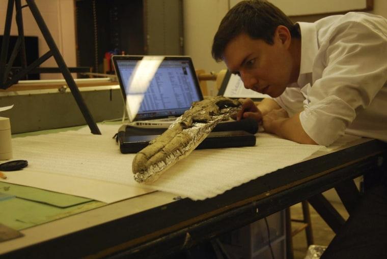 Image: Examining bird skull
