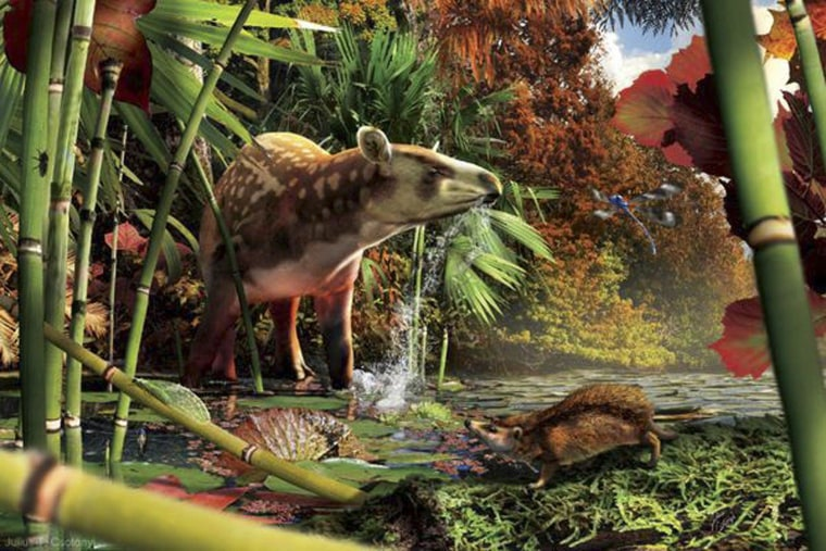 Image: An artist's rendering shows Silvacola acares, an ancient relative of modern tapirs, with the small proto-hedgehog in foreground