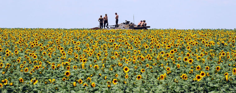 Image: Ukrainian government soldiers sit on an armoured vehicle as they take up a position in a sunflower field