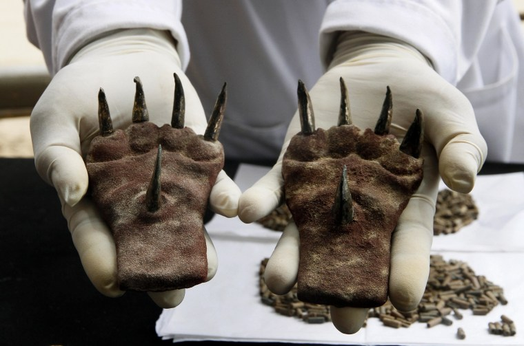 1,500-Year-Old Claws Intrigue Archaeologists in Peru